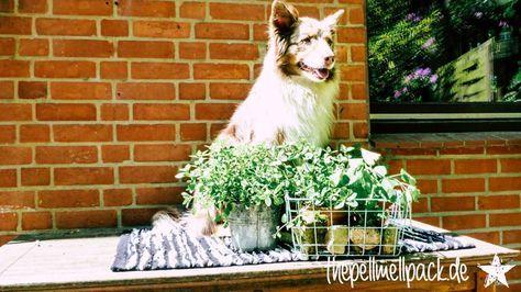 Kräuter Essentials für Hunde – diese 4 Alltagskräuter sind eigentlich Superhelden | Kräuter | Hund | Futter | BARF | Gesundheit | thepellmellpack.de