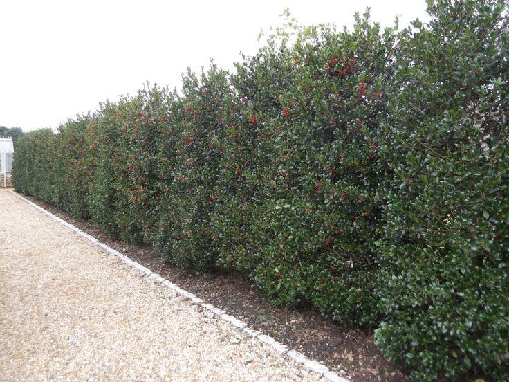 Instant Hedge - Garden Project | Garden Projects - Garden Design, Landscaping