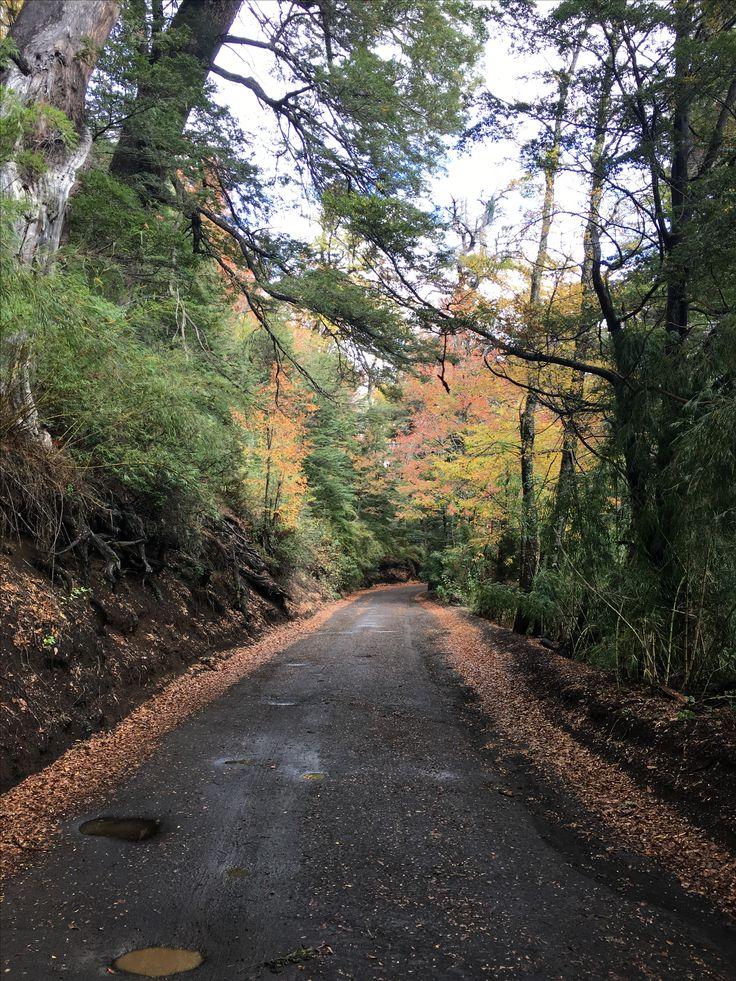 Parque Nacional Conguillio - Mayo 2017