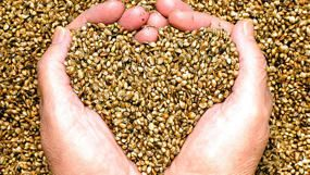 All the seeds you need to eat