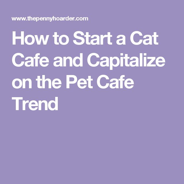 How to Start a Cat Cafe and Capitalize on the Pet Cafe Trend