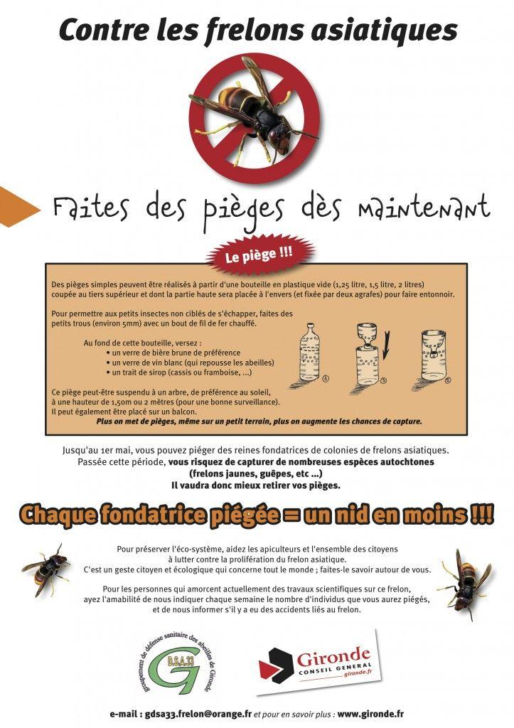 destruction, lutte,  frelons asiatiques, protection abeilles