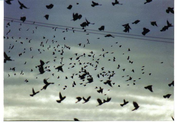 A madarak megérzik a tornádók közeledtét