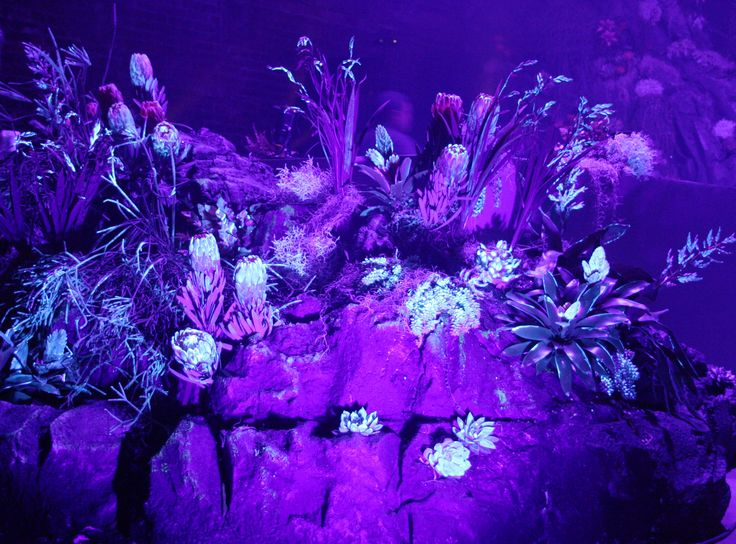 UV fed flowers on Kit and Caboodle's bespoke rock facia stage set. Riccardo Tisci's 2016 launch for Nike Lab