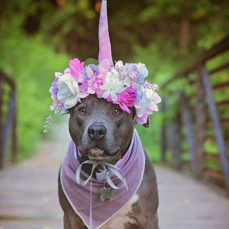 Sweet unicorn ☄