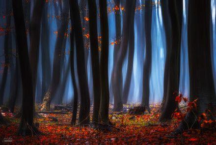 Jarní-soumrak-listí
