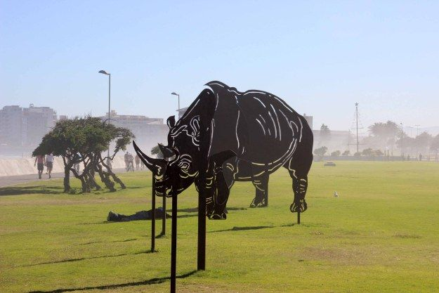 the memory of rhinos
