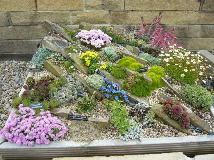 Steingarten anlegen aus schmalen Steinplatten, Moos und Sukkulenten