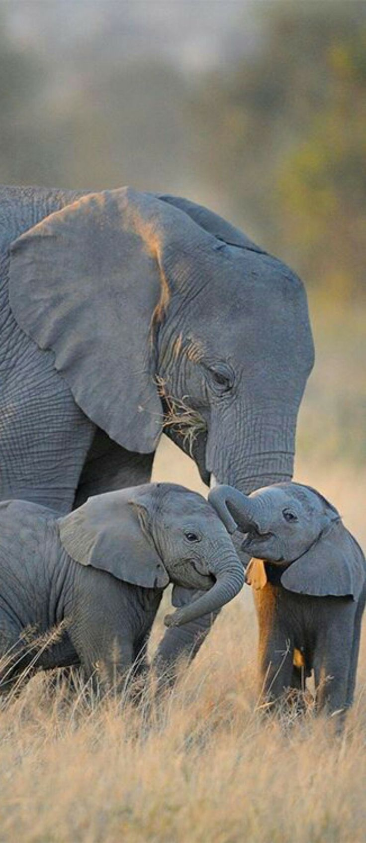 The love of a mama elephants is one of the most beautiful things you can observe .