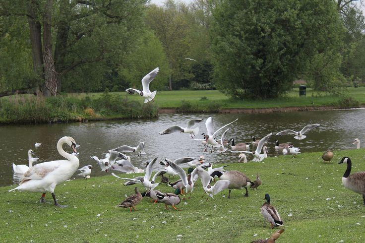 Riverside Park St Neots Cambridgeshire