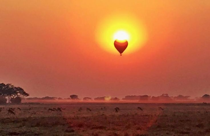 As the sun and hot-air balloon rise above the waking wilderness of the Busanga Plains, another day prepares to deliver its surprises. Image courtesy Namib Sky Balloon Safaris who operate our ballooning activities in Zambia's Kafue National Park. And did you know? This is a free activity for guests who stay three or more nights at our camps!
