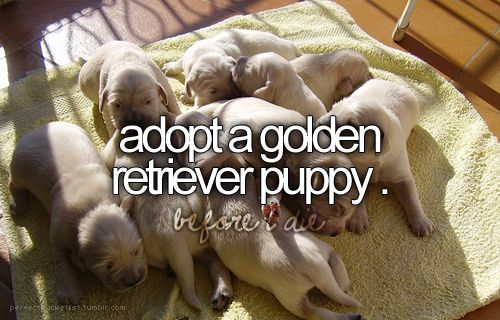I have always wanted a golden retriever ever since I was like 5... I still intend to adopt one someday. :)