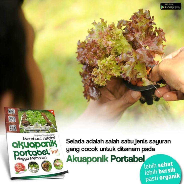 Sayuran yang paling cocok diaplikasikan pada sistem Akuaponik Portabel