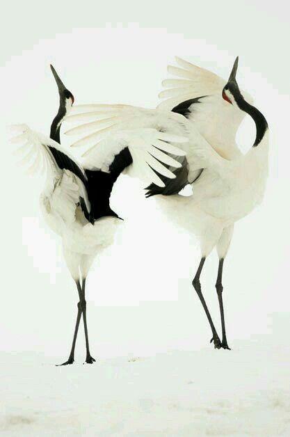 14 mejores imágenes de Oiseaux en Pinterest   Pájaros bonitos ...