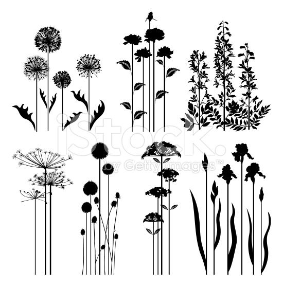 Black Flower Silhouette Stock Vector Illustration Of: Silhouettes Of Variable Spring Plants.