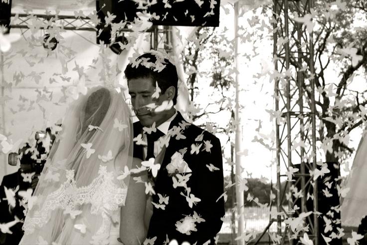 MGC Eventos – Lorena + Luis  Butterflies