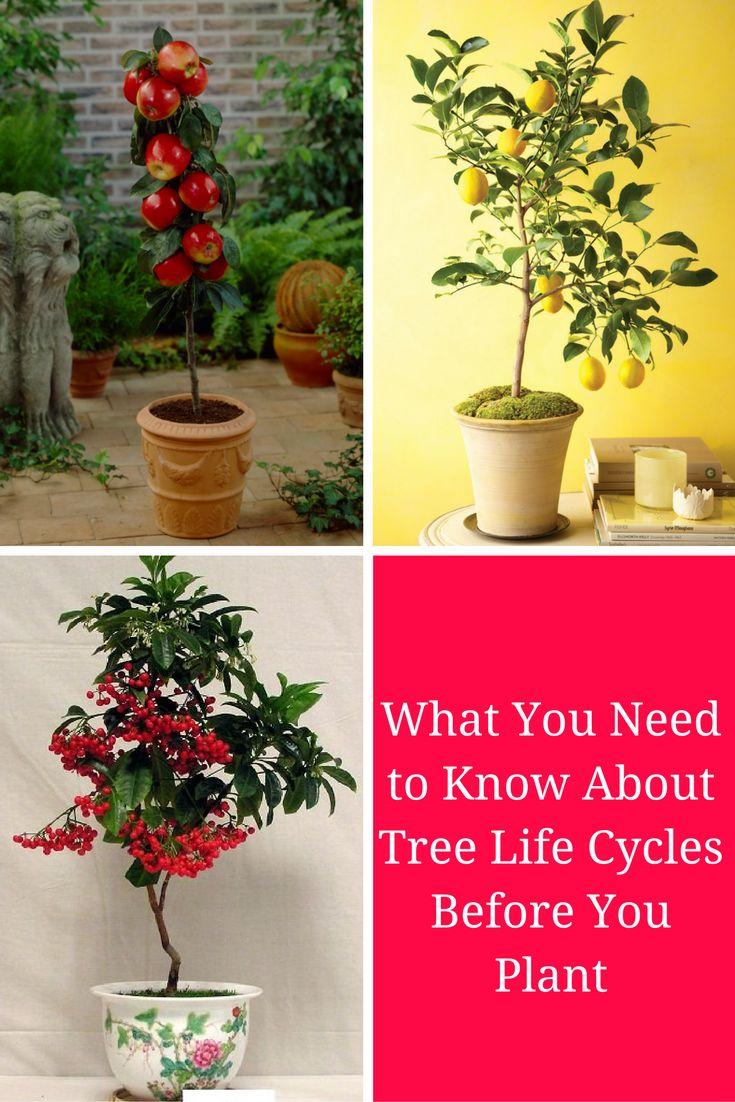 17 Best Ideas About Indoor Fruit Trees On Pinterest