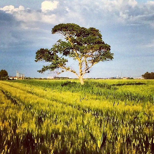 ...Lonly tree strada del cristo Castiglione della Pescaia  #tramonto  #sunset #toscana #tuscany #italia #italy #grosseto #instatuscany #igtuscany #igermaremma #igersmaremma