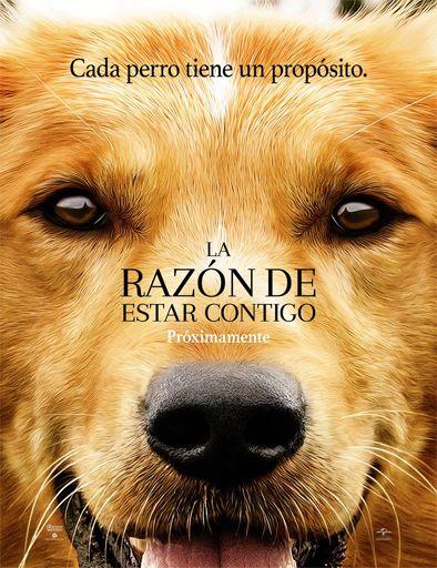 Ver La razón de estar contigo (A Dog's Purpose) (2017) Online - Peliculas Online Gratis