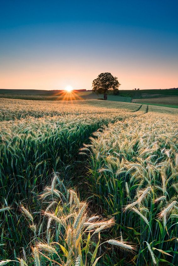 The sun rises over a farmers field.