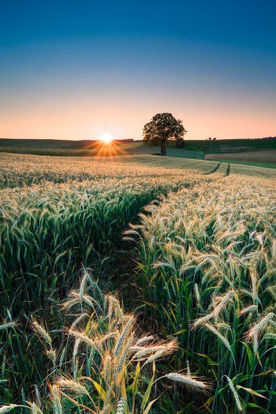 crop field Kraichgau, Germany