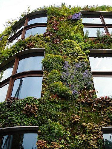 Oltre 1000 idee su giardini verticali interni su pinterest vertical gardens pareti verdi con - Giardini verticali interni ...