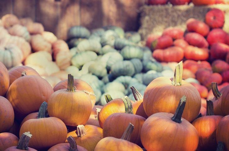 4 raisons pour découvrir les courges cet automne ! - EquipeNutrition