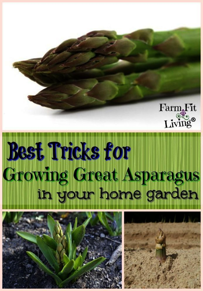 Gardening Tips In Tamil enough Gardening Tips For March