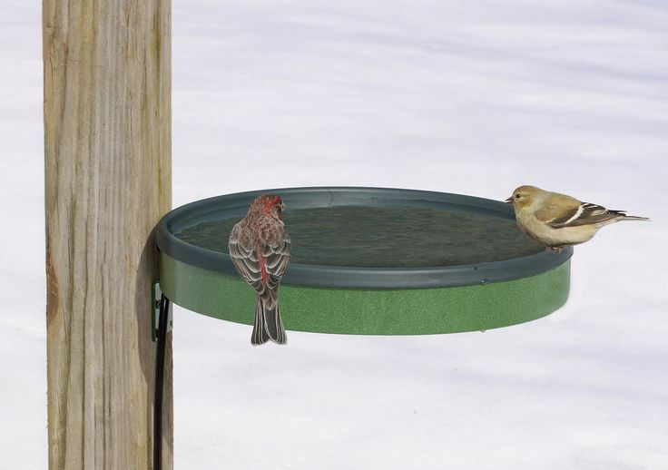 Duncraft.com: 3 in 1 Heated Bird Bath