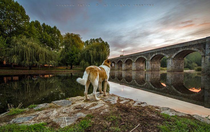 Uma das pontes de Gimonde, com o Gaspar a olhar :) The Best Friend... by Ricardo Bahuto Felix on 500px