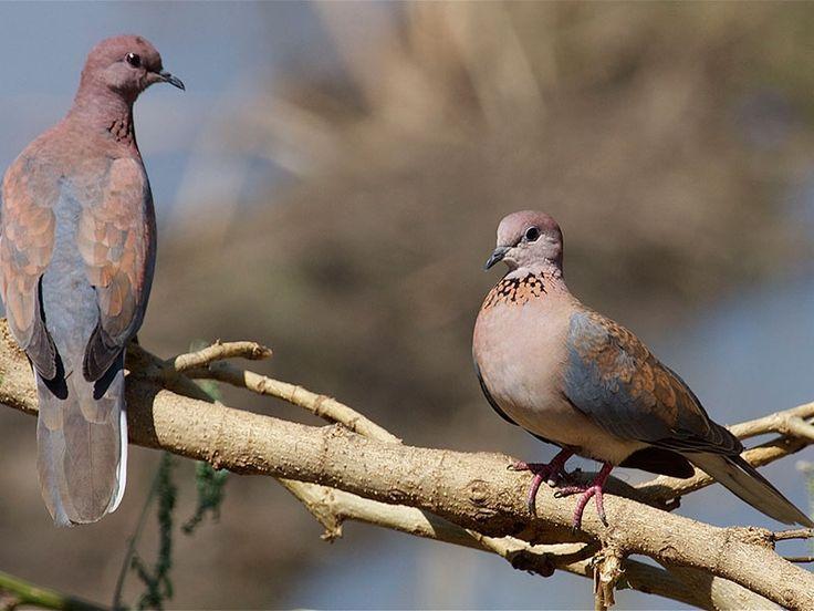 Bhindawas Bird Sanctuary in Jhajjar, Haryana, India