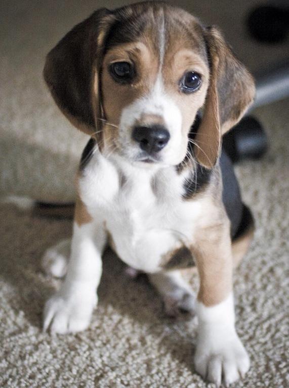 Puppy dog eyes! pic.twitter.com/jdxEQVls7G