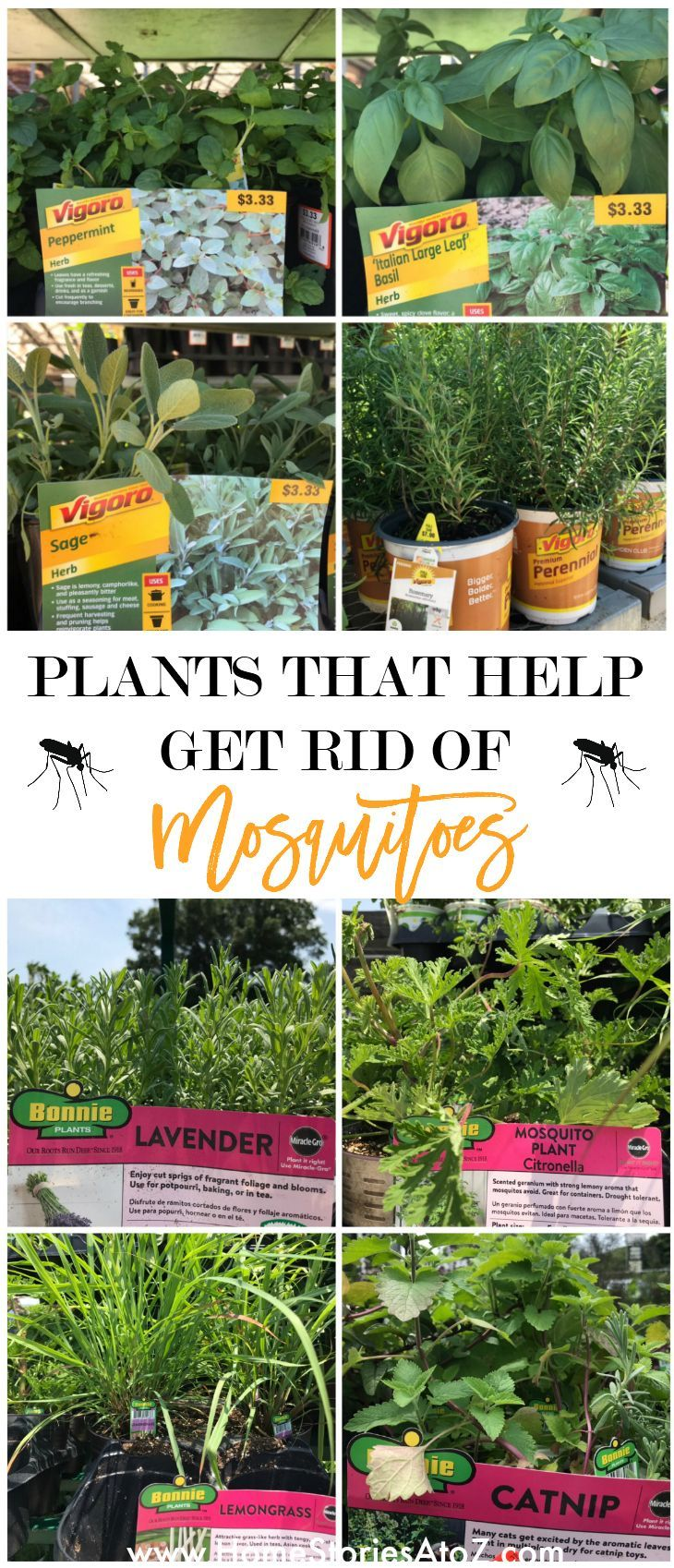 How To Rid Yard Of Mosquitoes