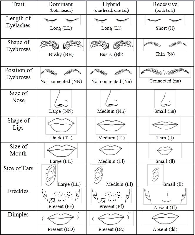 Recessive Dominant Trait Activity Genetics Traits Biology Classroom Genetics Lesson