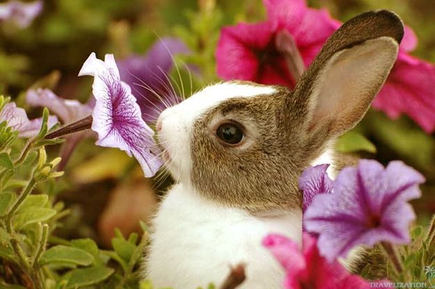 A Florist S Guide To Easter Cute Baby Animals Cute Baby Bunnies Cute Animals