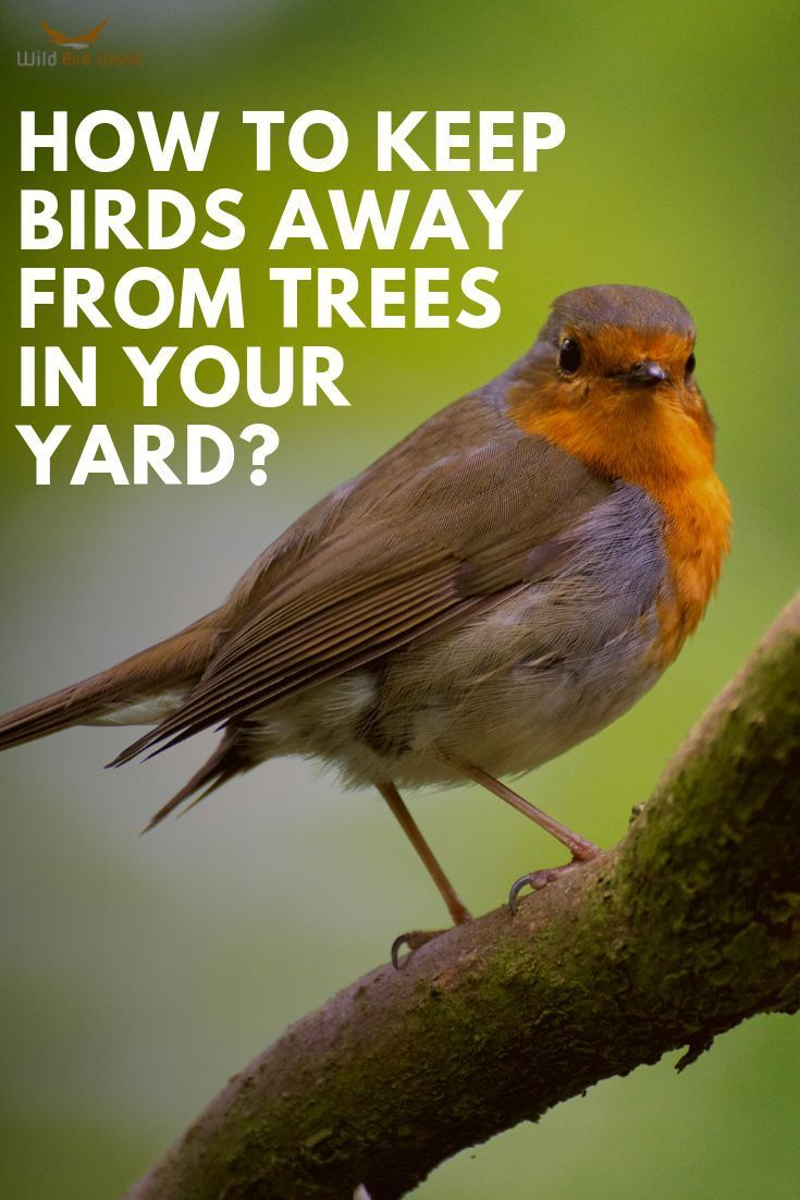 27a1fe6cc0ba4776f9675f10f5d54f3f - How To Get Rid Of Birds In Your Trees