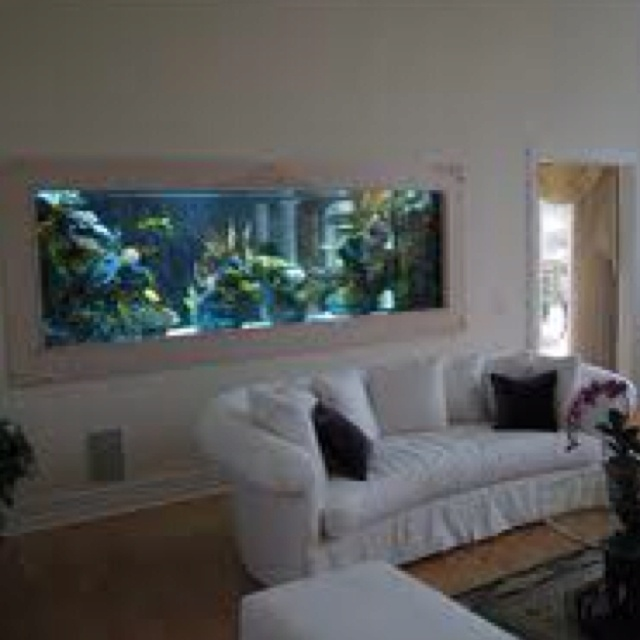 Best Aquarium Images On Pinterest Aquarium Ideas Wall