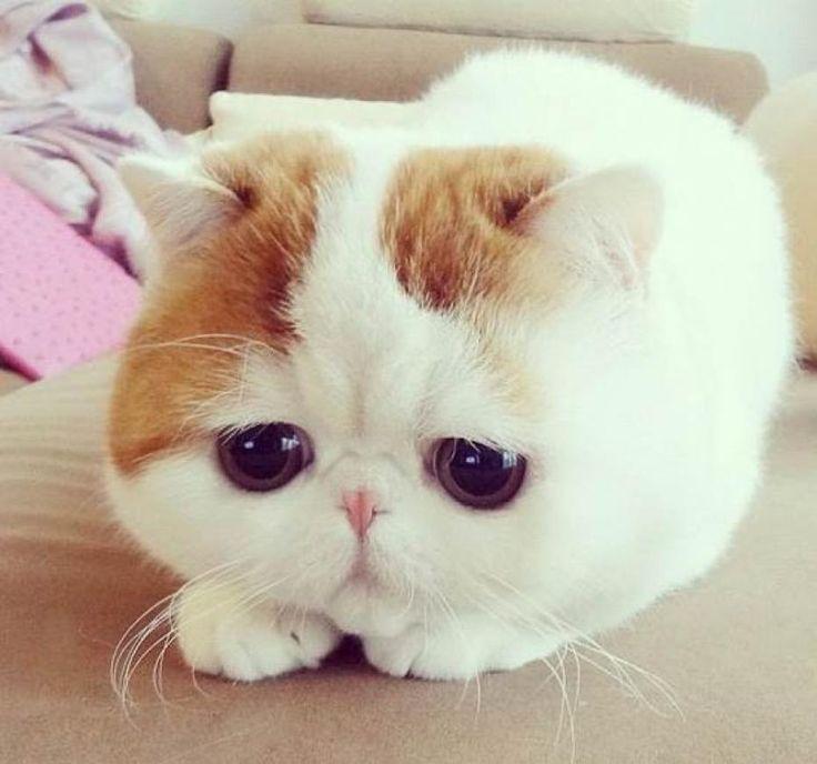 Instagram : Snoopy Babe, le nouveau chat star aux 200 000 followers !