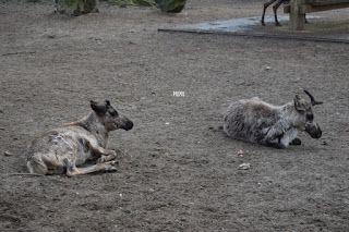 Miriam Mylene's reisblog: Uit in Nederland: Ouwehands Dierenpark in Rhenen