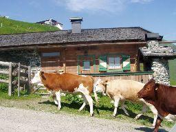 Skihütte für 4 Personen (45 m²) in Jochberg