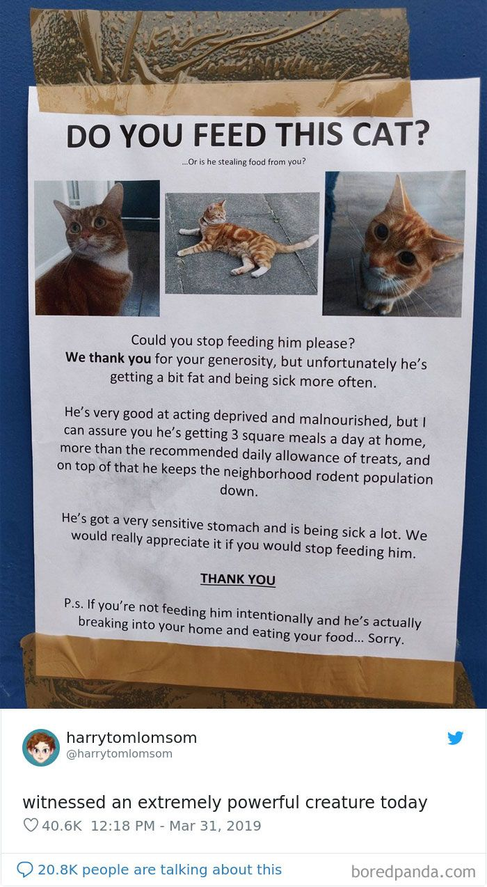 Cat Tweets In 2020 Cute Funny Animals Funny Cats Cat Memes