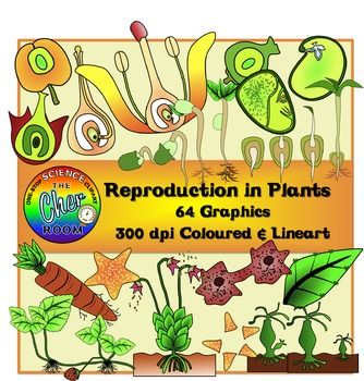You'll be getting a huge set to teach all about reproduction in plants! This set contains 64 graphics (32 coloured, 32 lineart) of the following:Asexual Reproduction:Binary Fission (3)Spore Formation (2)Budding (2)Vegetative Reproduction (3)Regeneration (3)Sexual Reproduction:Structure of Flower (1)Fertilisation (3)Formation of Fruit (3)Germination:Dicot (6)Monocot (6)Check out my other Biology Clipart sets that you may need:Cells (Plants and Animals)DNABird BeaksHuman ReproductionHuman…