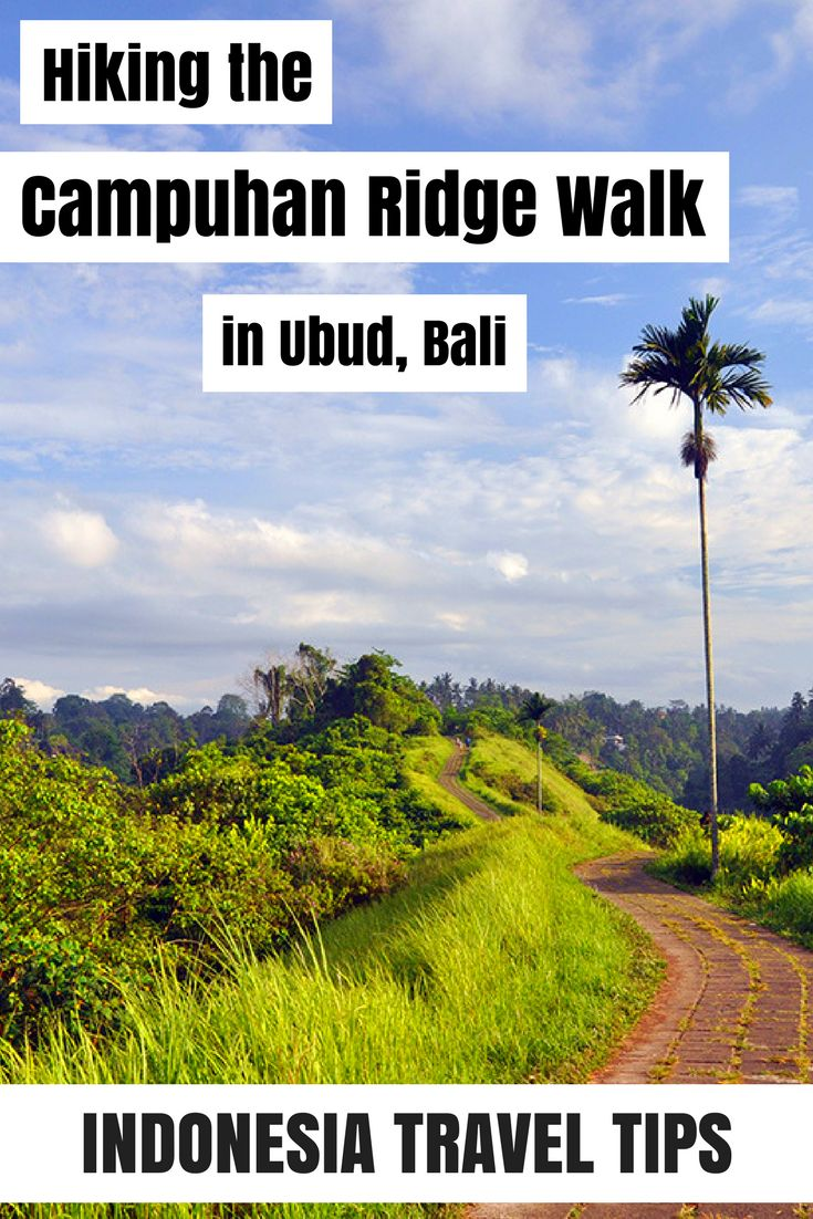 Hiking the Campuhan Ridge Walk in Ubud Bali – an amazing urban adventure right in the middle of the rice fields. In my blog you will find all you need to know about this walk. From how to get there to foods & drinks along the way as well as the best time for hiking and what the best hiking options are.   #ubud #bali #travel #indonesia #campuhanridgewalk