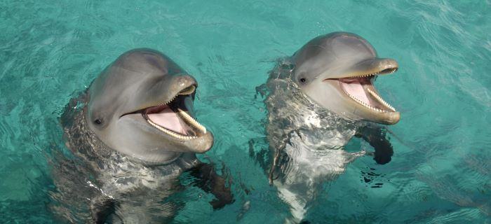 Swim with dolphins at Runaway Bay, Jamaica