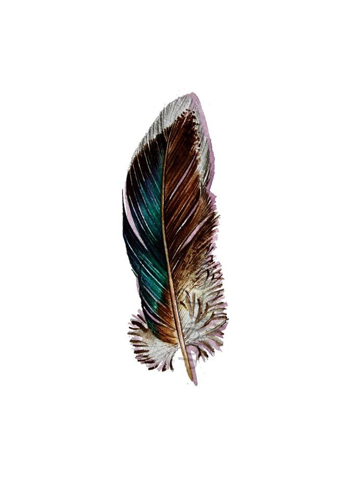 watercolor tattoo   Mallard Feather Original Watercolor Nightly Study by jodyvanB