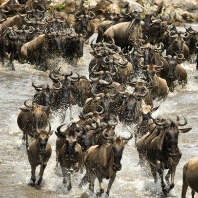 Serengeti National Park | verdeeld over het noorden van Tanzania en het zuiden van Kenia | Bekend van de migratie