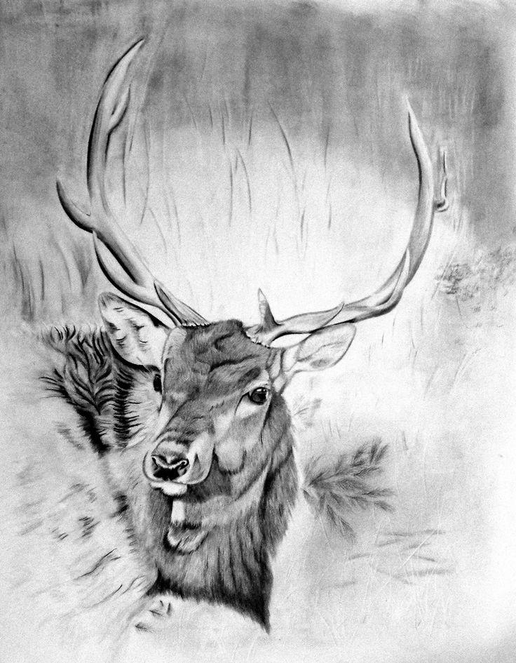 #pencil art #elk #wildlife #art  http://www.suzysfineart.com/