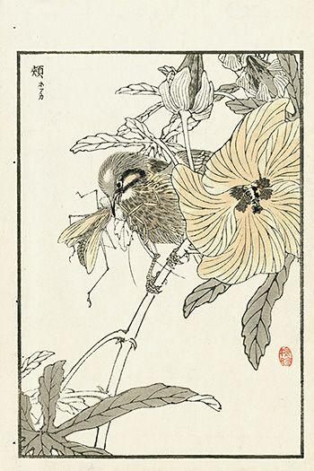 Bairei's Album of One Hundred Birds 1881 Japanese Prints