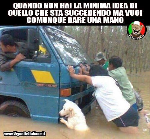 #vignette #divertenti #italiano #cani