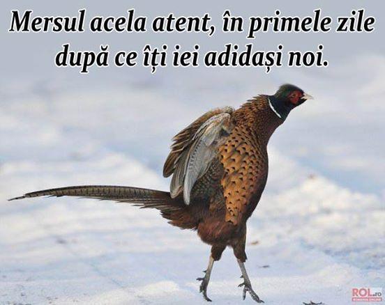 www.rol.ro